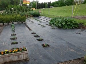Vegetable Garden Inch By Inch Row By Row Garden