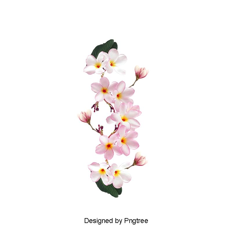 Vecteur Des Fleurs De Magnolia Rose Magnolia Rose Une Fichier Png Et Psd Pour Le Telechargement Libre Flower Png Images Vector Flowers Magnolia Flower