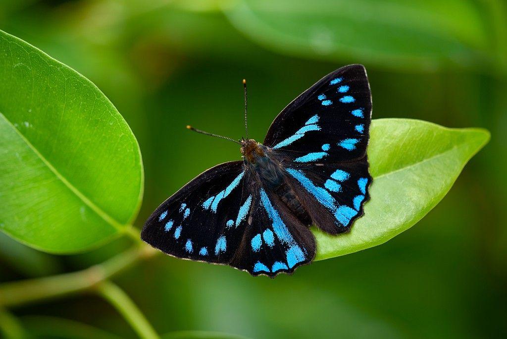 Pin Von Gabi Epple Auf Schmetterlinge Und Motten Schmetterling