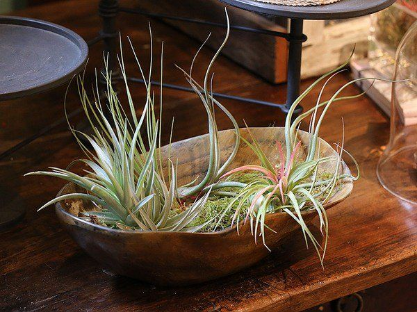 Air Plants Containers Ideas Table Decoration DIY Easy Air