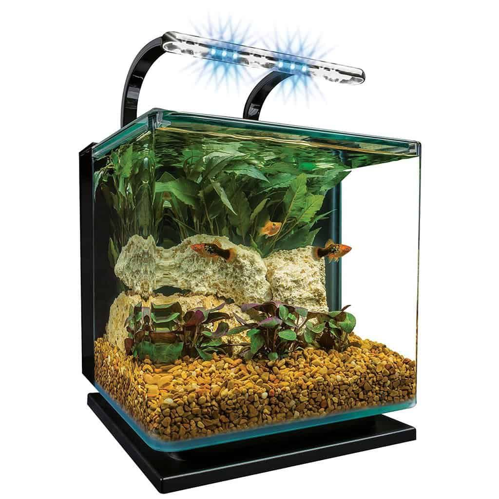 Marineland Aquarium Review 5 Gallon Contour Glass Aquarium Aquarium Kit Betta Fish Tank Aquarium