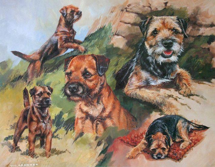 Granger Working Border Terriers Terrier