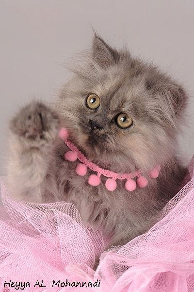 Vintage Shabby Pink! Cute cats