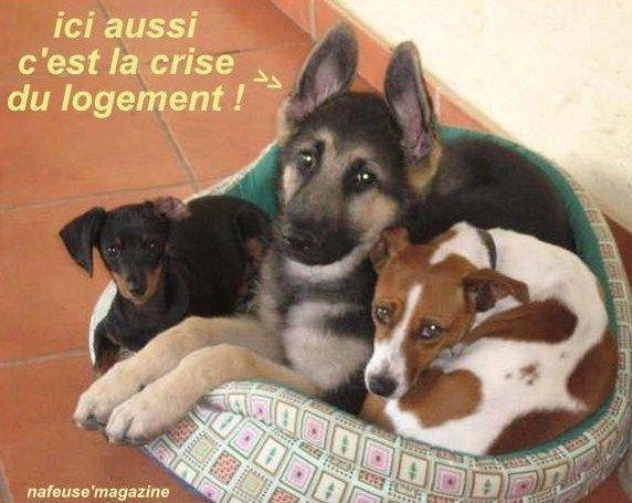 Photos animaux dr les avec l gendes humoristiques photos insolites animaux dr les dr le et - Animaux humoristiques ...