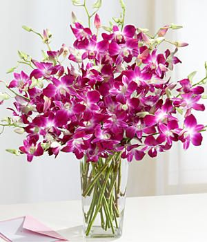 Orchids - some daily sun and water once a week = beautiful flowers for the home.