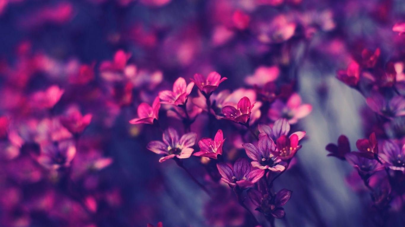 Little Purple Flowers Wallpaper In 1366x768