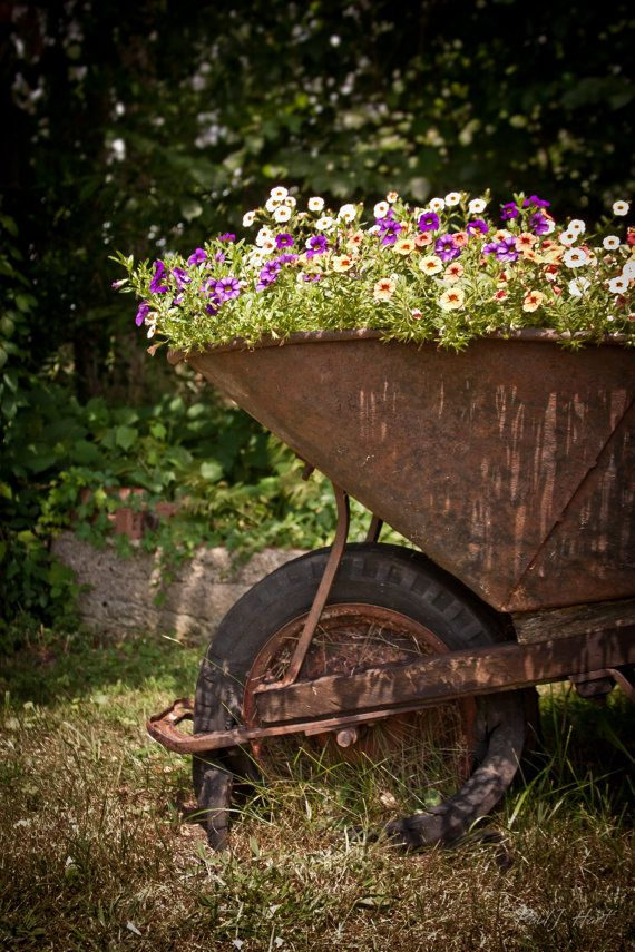 Flowers in Wheelbarrow Photographic Framed Metallic Print 16 x 20 #landscapingtips