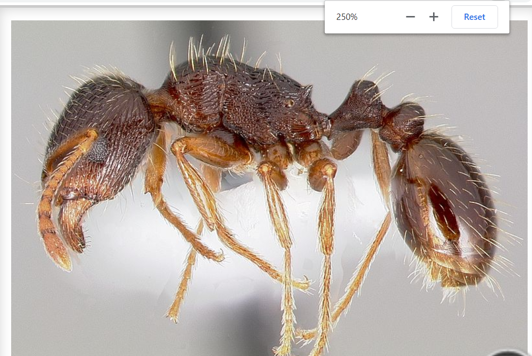 Ants Control Ants, Types of ants, Carpenter ant damage