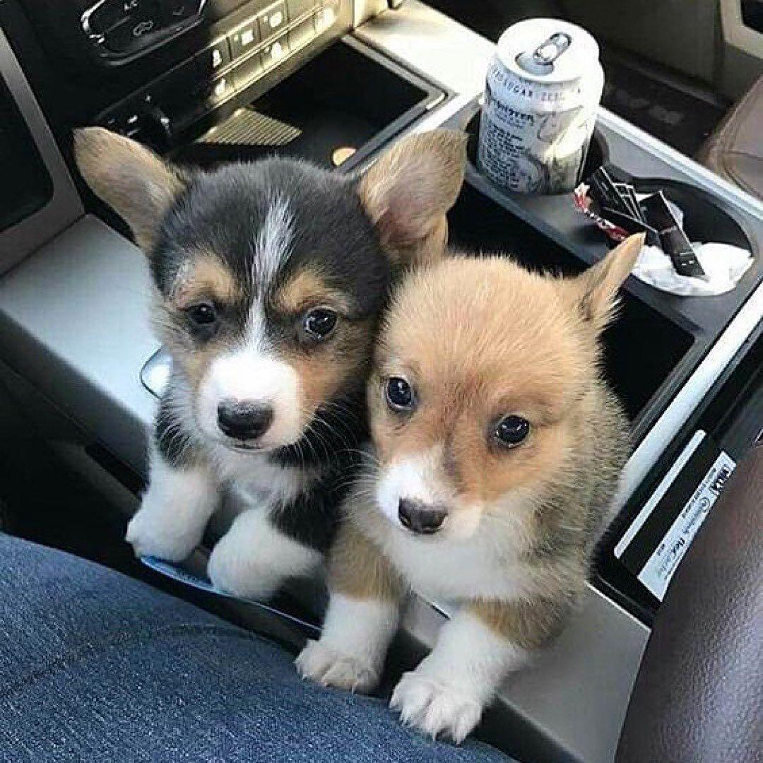 Pin By An Drea On 2 Cute Animals Cute Animals Puppies Cute