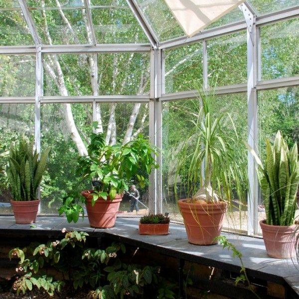 wintergarten-pflanzen-pflege-balkon-farnen mi terraza Pinterest