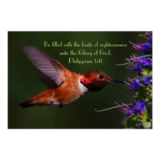 Hummingbird Bible Verse Philippians 111 Poster All Things Zazzle