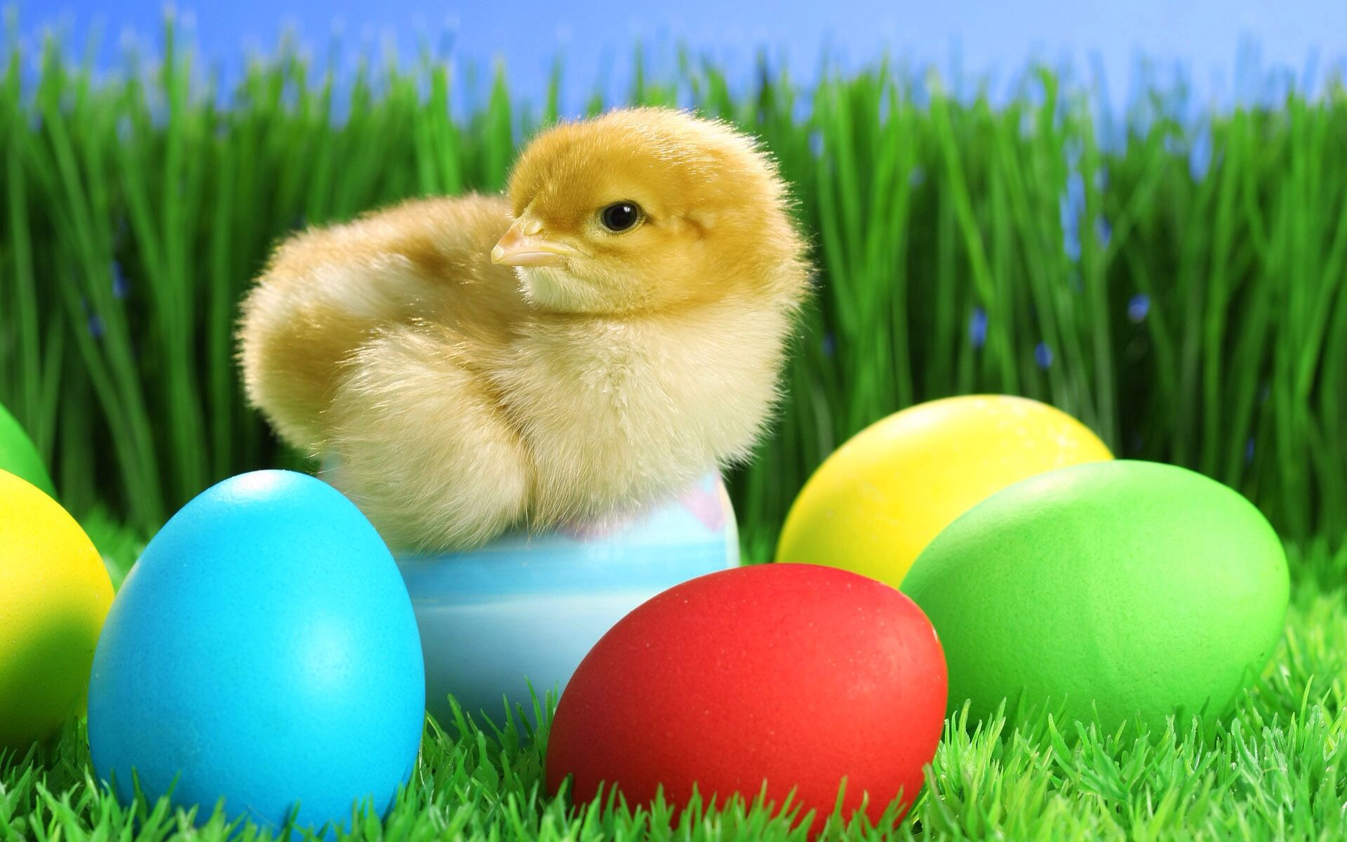 Chick resting on eggs bunny holiday pinterest