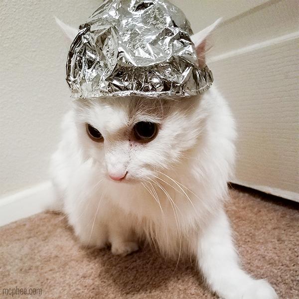 Tin Foil Hat For Cats Tin Foil Hat Crazy Cats Cat Hat