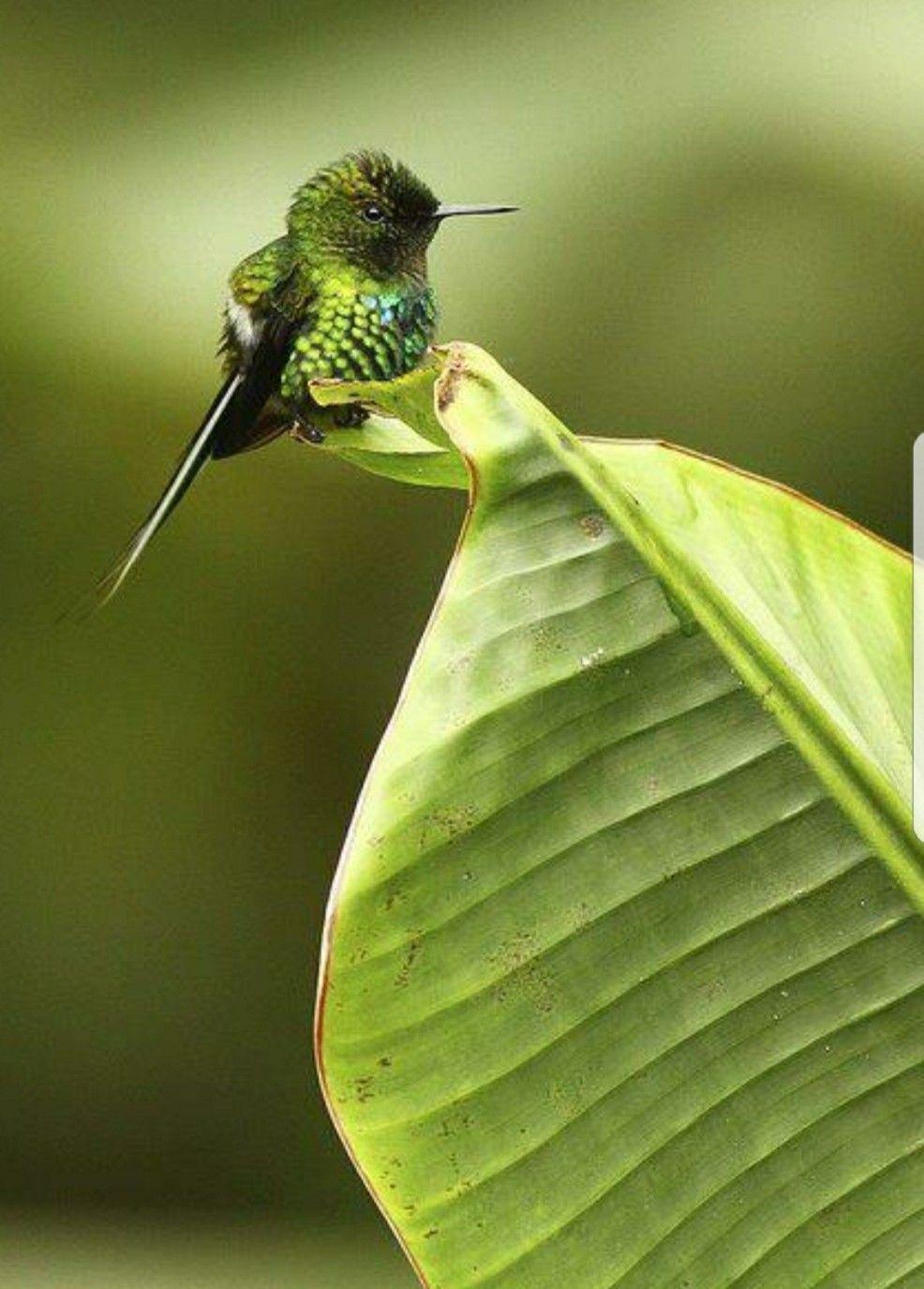 Baby Hummingbird Awww.... Birds, Bird species