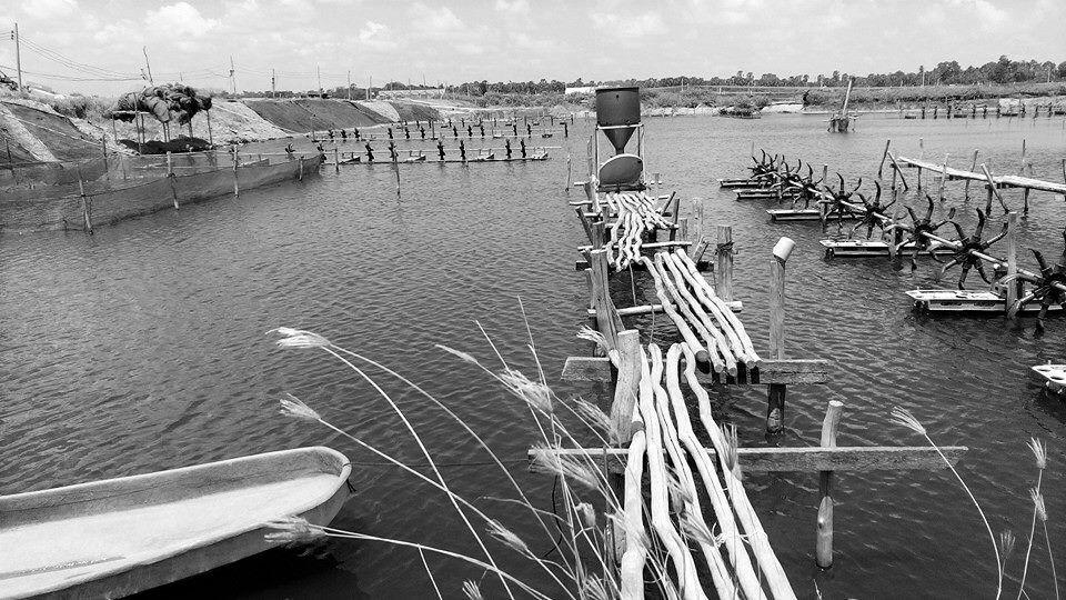 Hệ thống cho tôm ăn bằng cảm biến âm thanh | Mạng Thủy sản Việt Nam