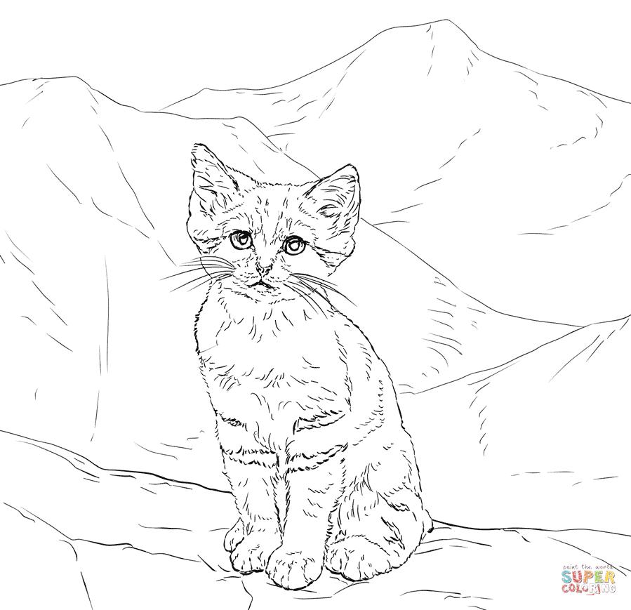Sand Cat Kitten Super Coloring In 2020 Kittens Coloring Cat Coloring Page Kitten Coloring Book