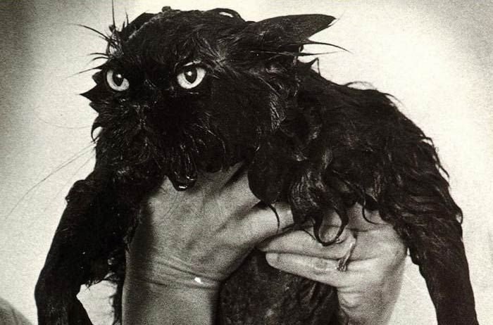 wet-cat-10   Black cat humor, Wet cat, Funny cats