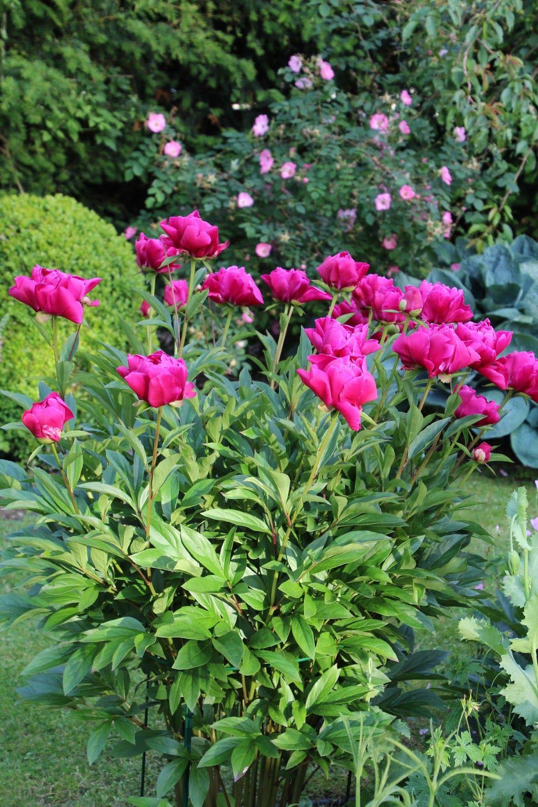 Immagini Piante E Fiori pin på piante e fiori