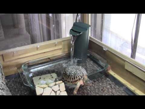 Box Turtles Get New Wading Pool With Filtration Box Turtle Box Turtle Habitat Turtle Habitat