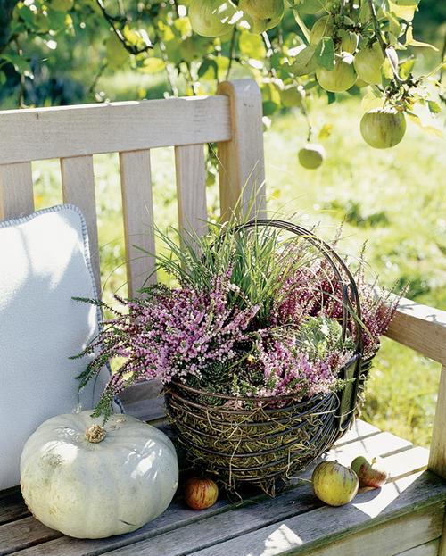 Einflußreiche Farben Und Dekoration: Heidekraut #garten #dekoration