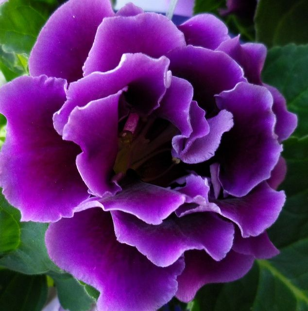 So very purple <3