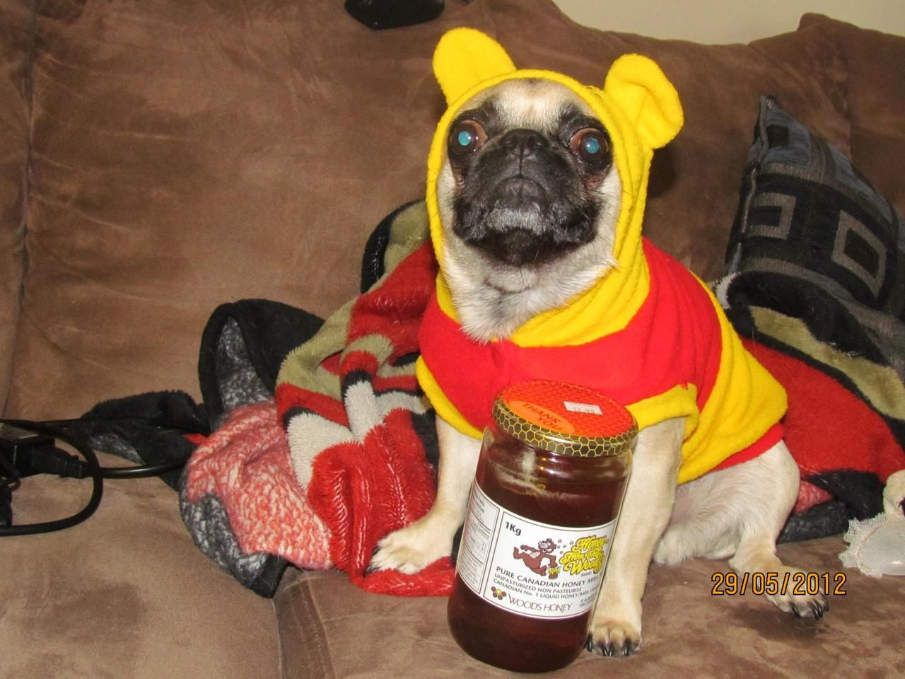 oh bother ..... i think my tummy is hugry