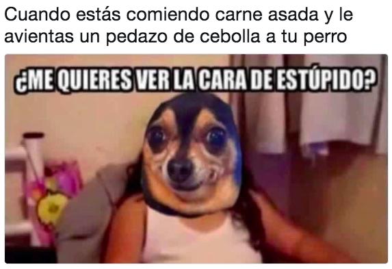 Como Aranar El Sofa Y Echarle La Culpa Al Perro Memes Divertidos Memes Estupidos Humor De La Musica