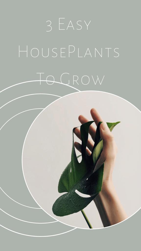 3 Easy Houseplants to Grow - | Hemp oil, Houseplants ...