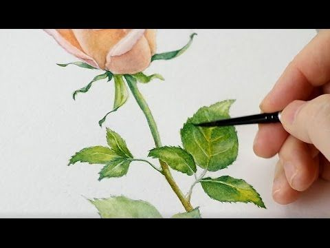 The Mind Of Watercolor With Steve Mitchell Lesson 4 Botanical