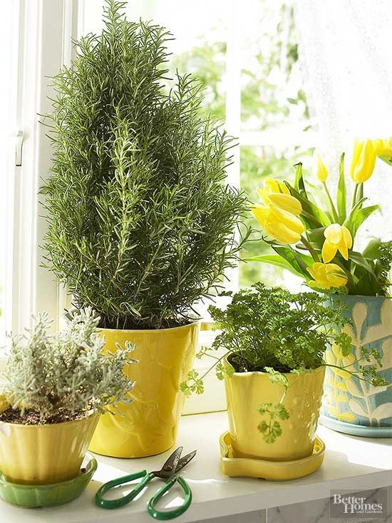 Growing herbs indoors in containers is easier than you think See how to grow herbs