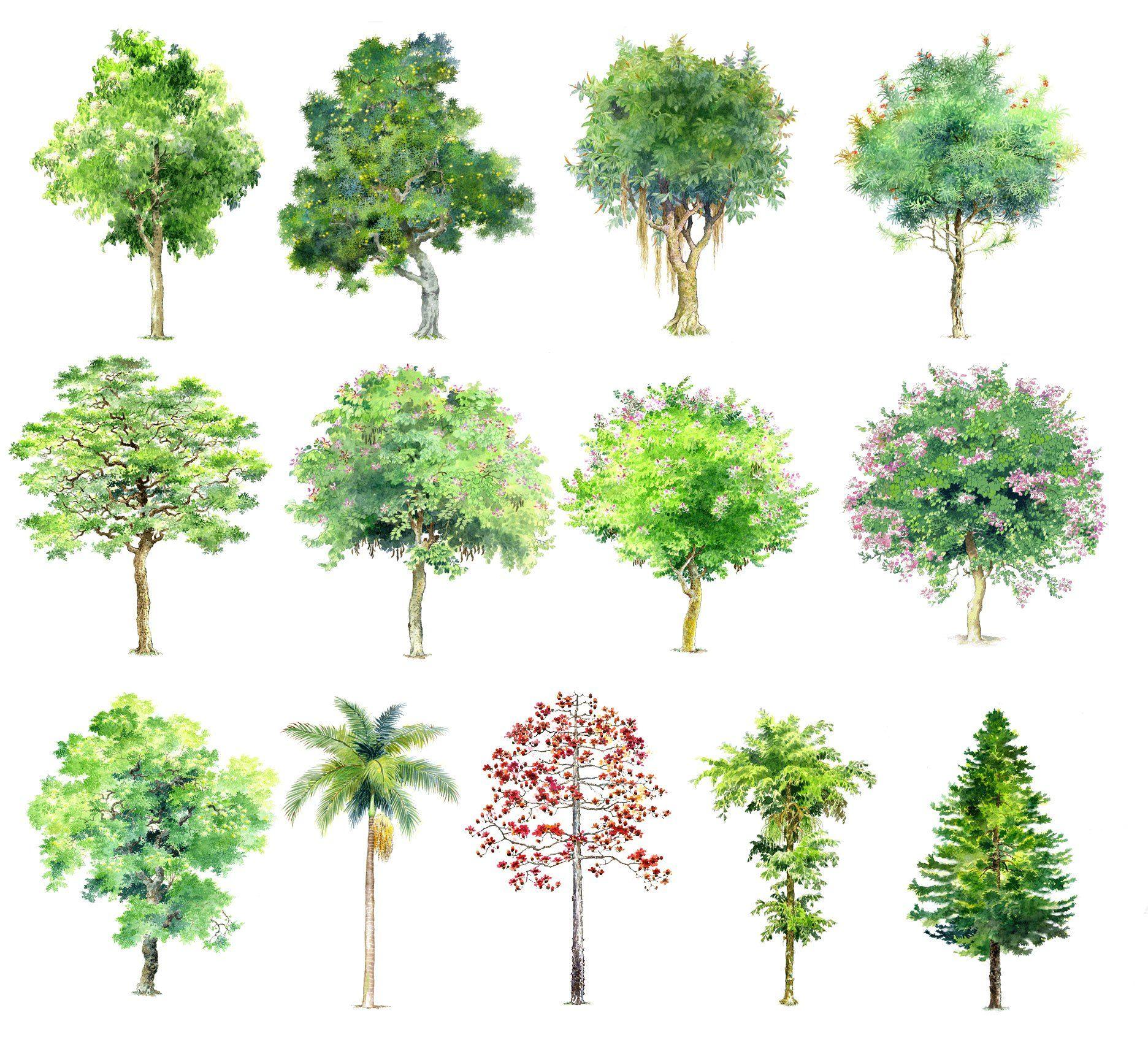 Hand-painted PSD Tree Blocks 1