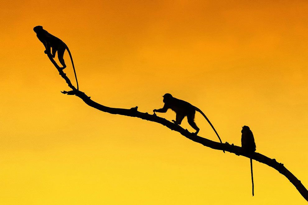 Photographer Marc Mol Captures Fantastic Pictures Of African Savannah In Silhouettes