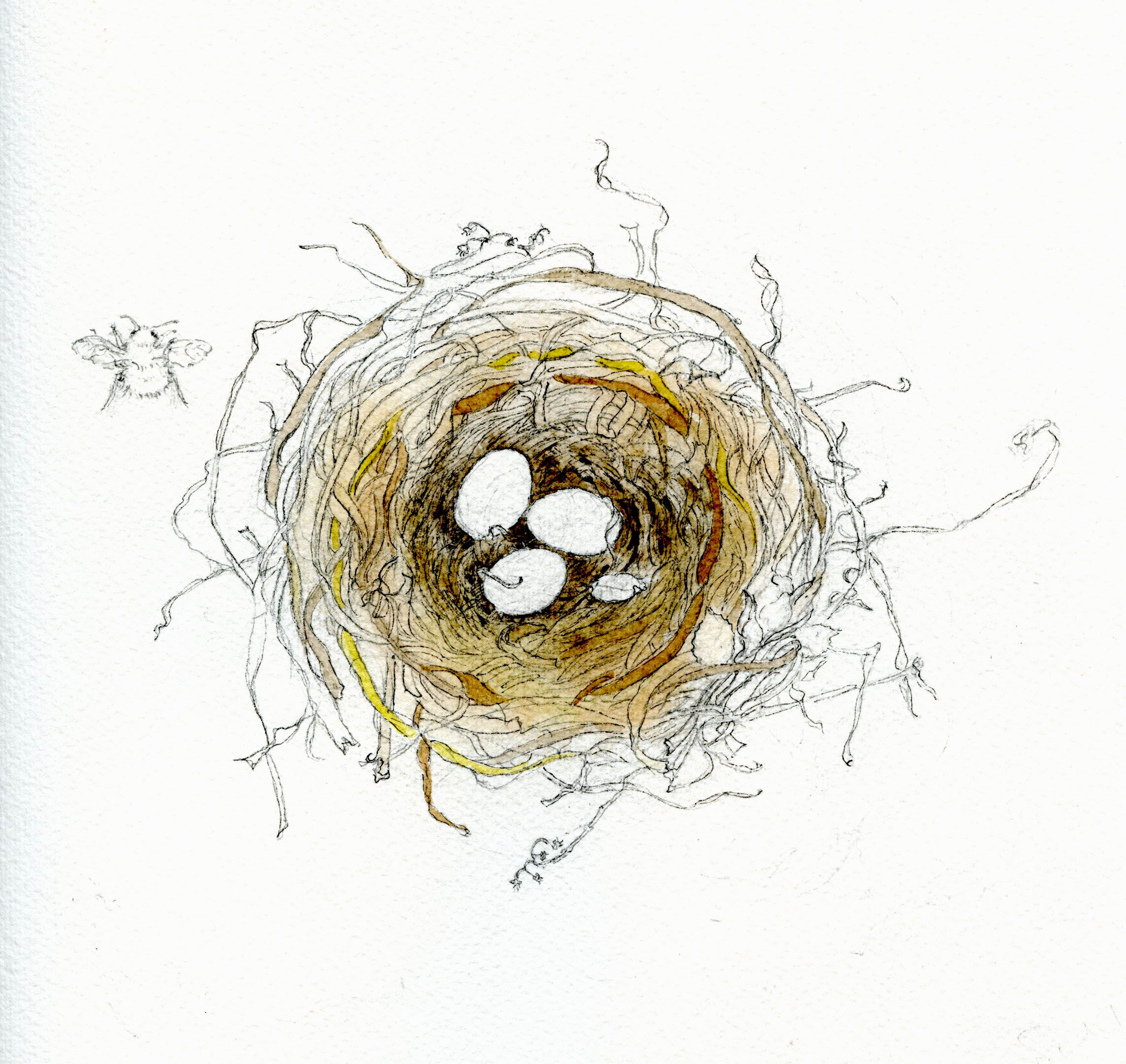 Original Watercolor Nest Birds Nest Watercolor Wall Art Bird