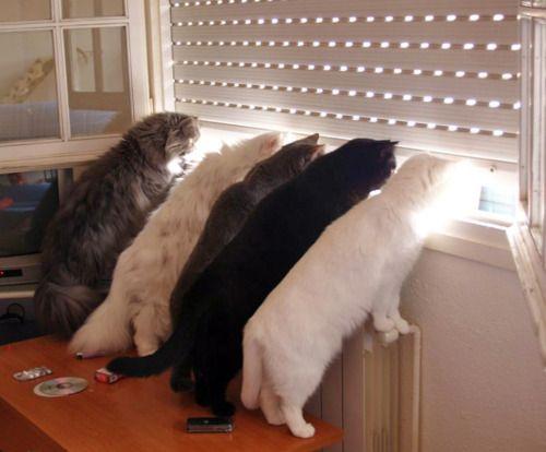 spying on the neighbors.