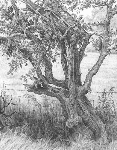 Nature studies graphite pencil drawings by diane wright
