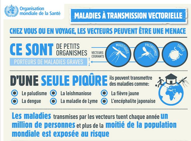 Les maladies à transmission vectorielle : l'infographie de @Alexandra M ! http://bit.ly/1hb8yhk   pic.twitter.com/lZp3TM8v9C