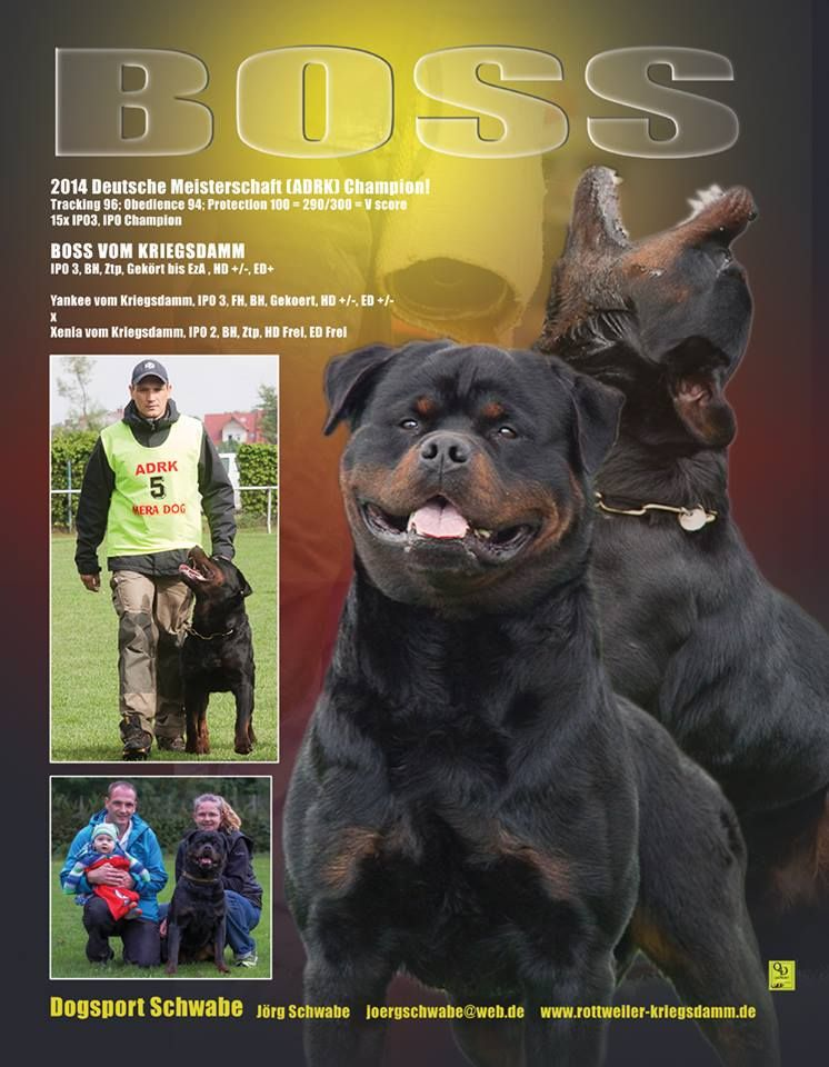 Do You Have A Stud Dog Advertise With Ttrm For Maximum Exposure 1 4 Page Stud Dog Ads Starting As Low As 84 Www Ttrmshop Com Stud Dog Dogs Rottweiler