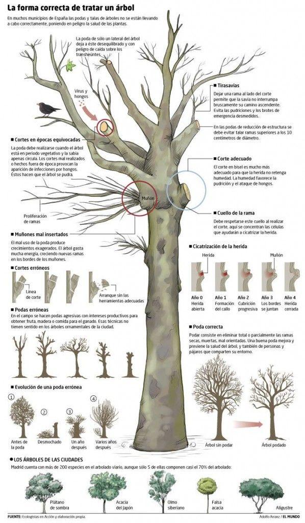 Poda árboles