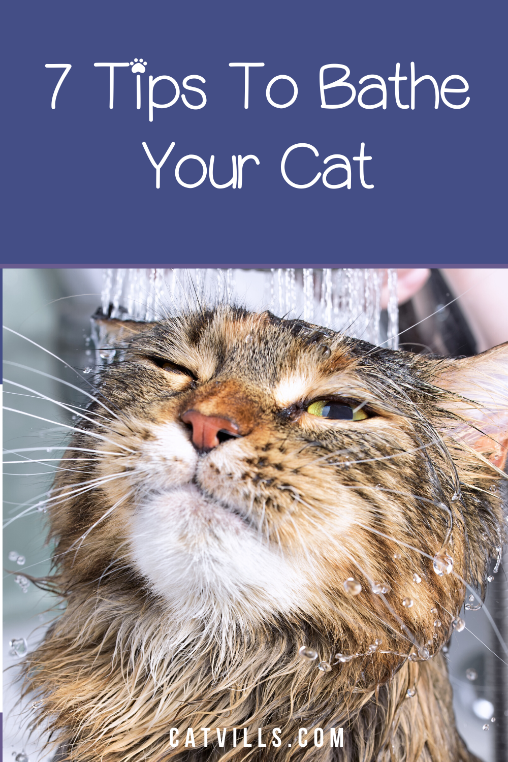 Catvills All About Cats And Kittens In 2020 Cats Cat Health Cats And Kittens