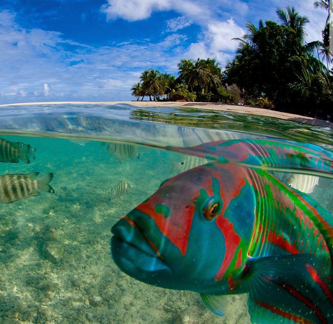 South Pacific Beaches: Ocean Life, Marine Fish, Sea Fish