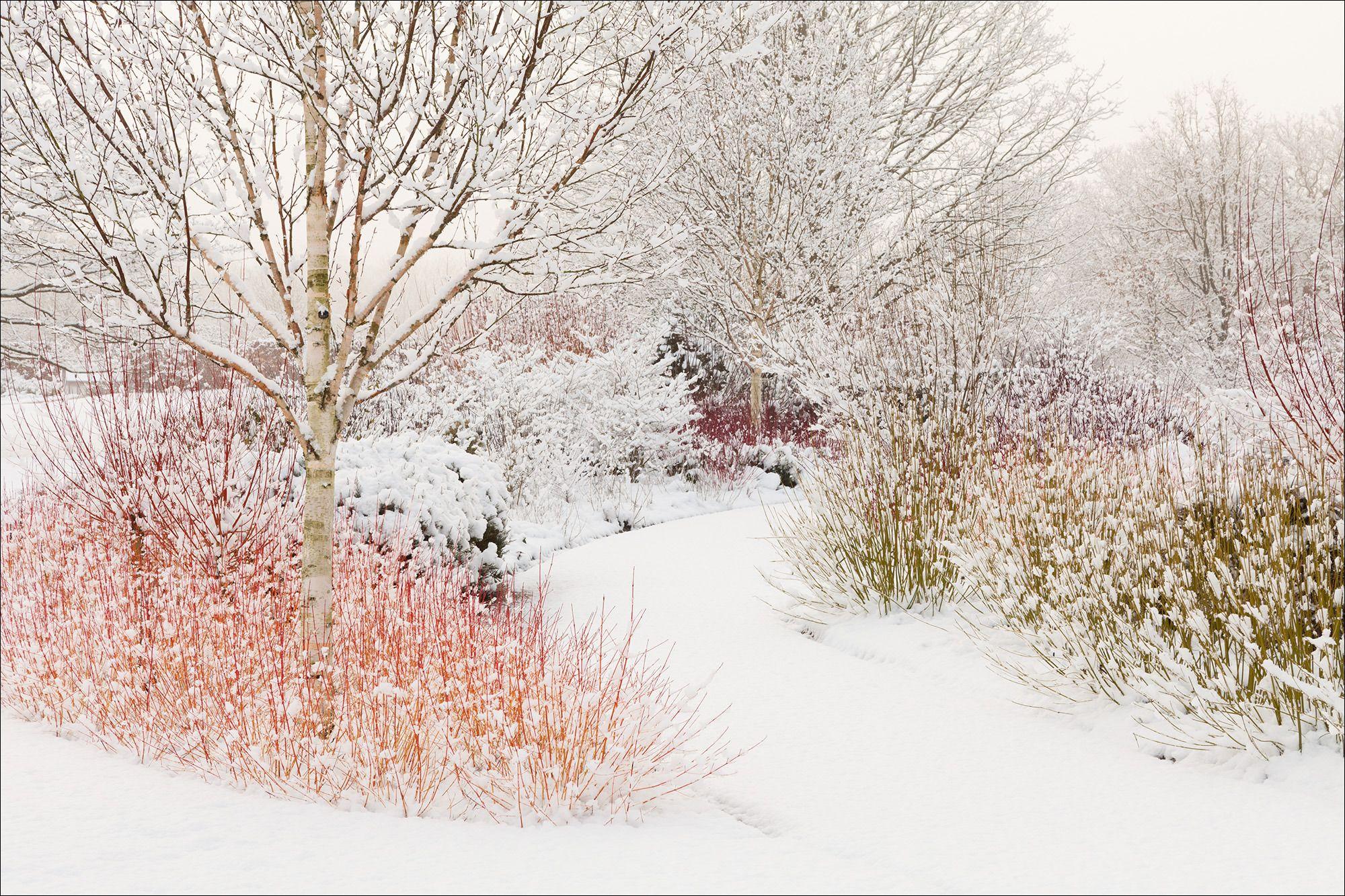 ph lee beel rhs garden harlow carr yorkshire uk winter