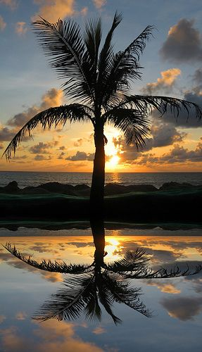 John Dalkin Palm Tree Sunset Gorgeous Scenery Scenery Pictures