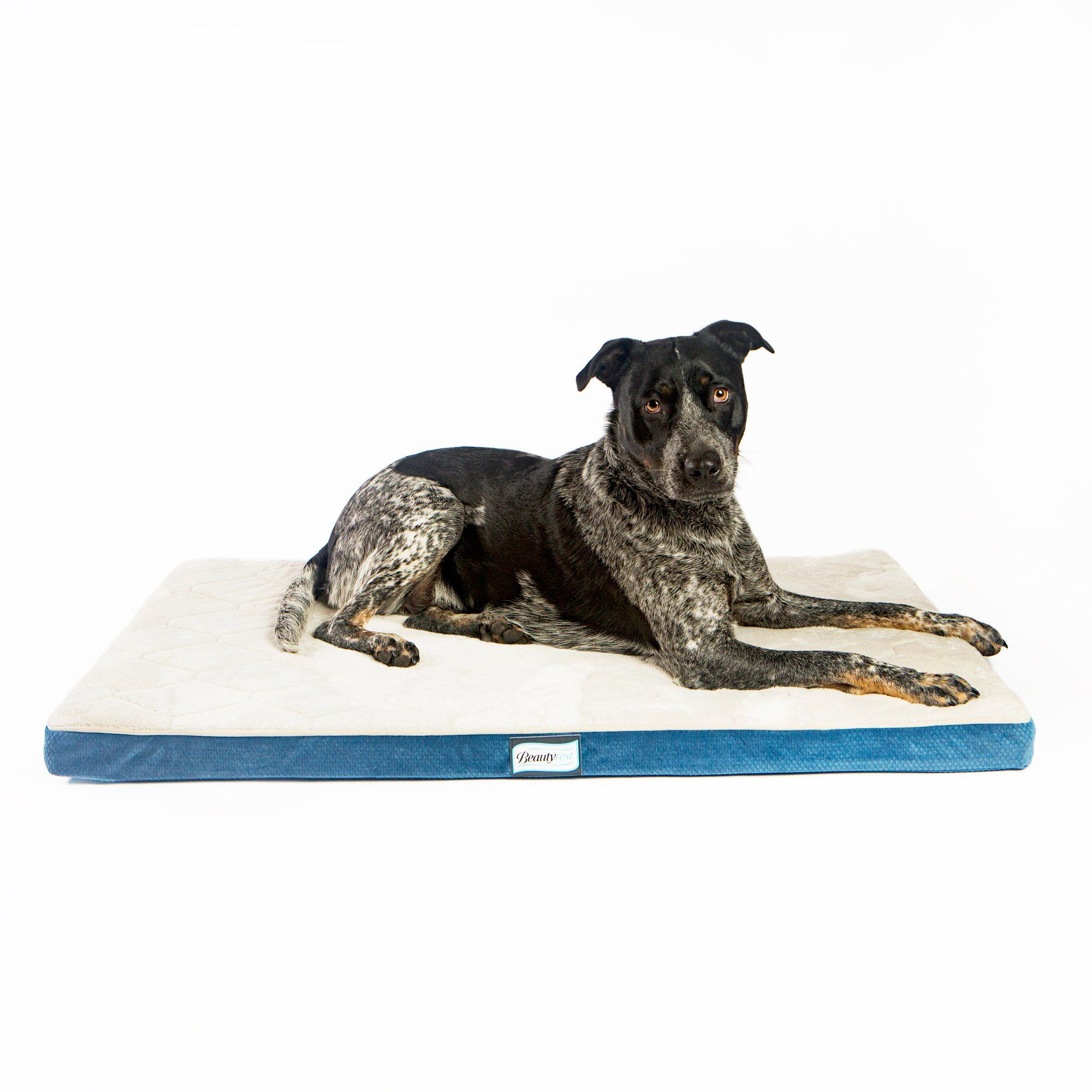 Simmons Beautyrest Thera Bed Orthopedic Memory Foam Dog