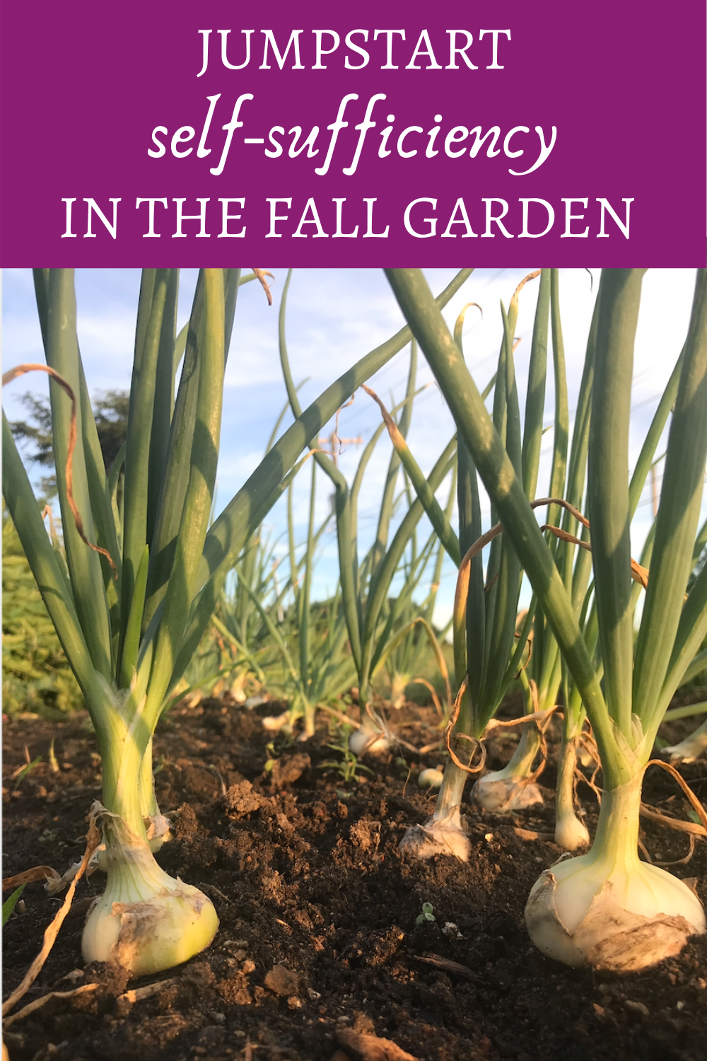 Interested in self-sufficiency? Jumpstart self reliance in the fall garden. Learn why and how easy it is to start the road to food self sufficiency in the fall vegetable garden. Including top 5 crops to get you started. #selfsufficient #selfreliant #fallgarden #homesteading #homesteadgarden #vegetablegarden #fallvegetables #storagecrops