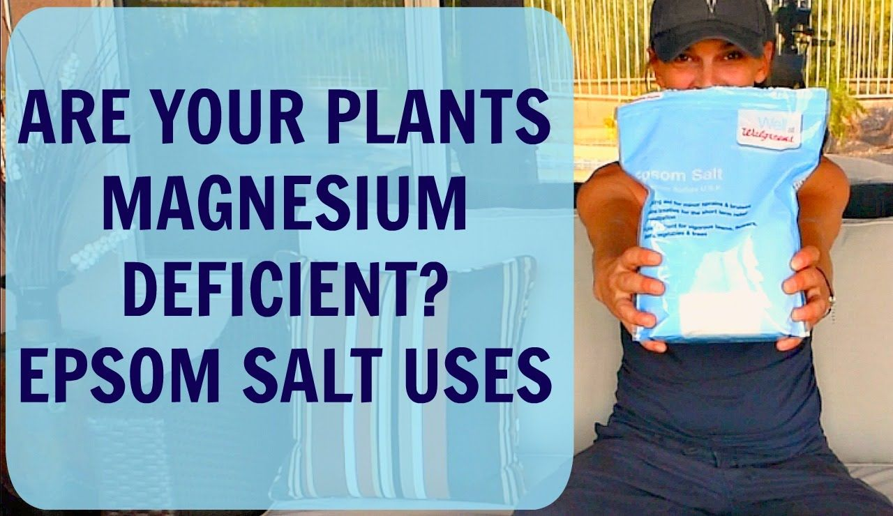 Epsom Salt For Plants Tomatoes Peppers Hibiscus 400 x 300