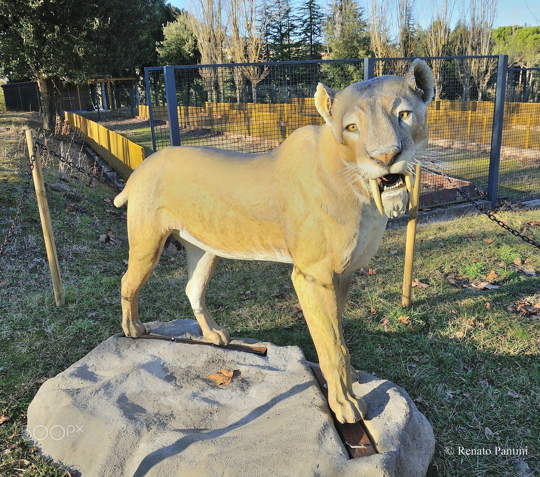 Smilodon Fatalis Smilodon Fatalis Or Saber Toothed Tiger