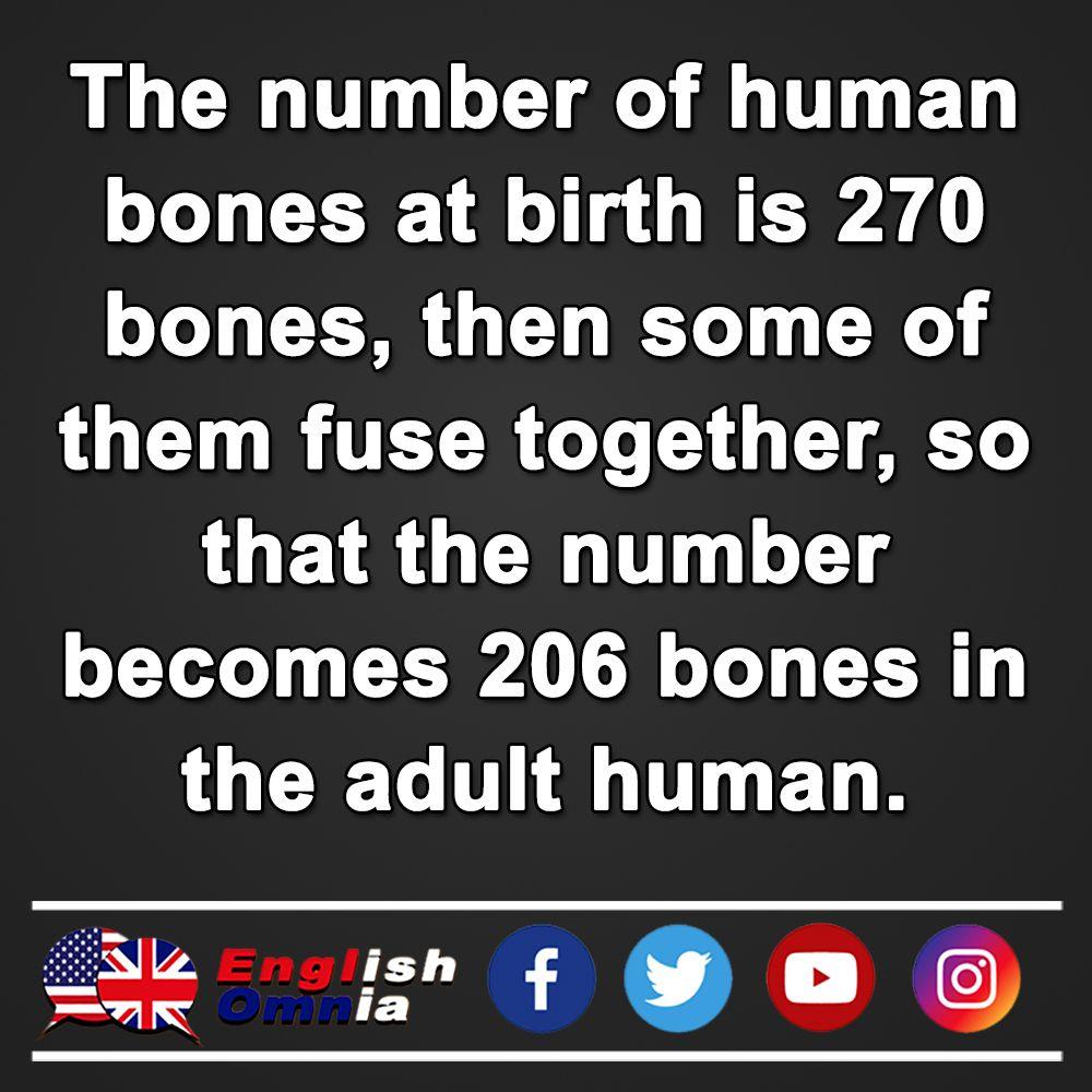 Fact 3 Learn English Learning Human Bones