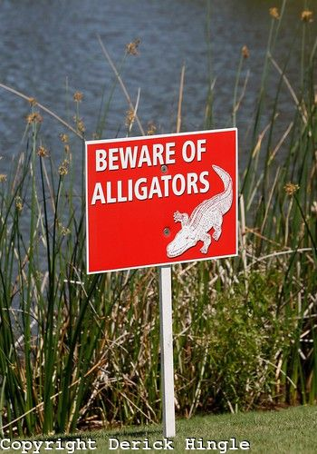 yes in deed...we have gators in Cross Lake where we live in North Louisiana. It is a common thing in a lot of the Southern States.