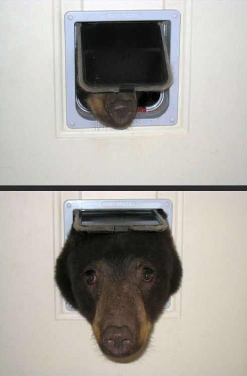 When a strange looking dog tries to come in the cat door follow...