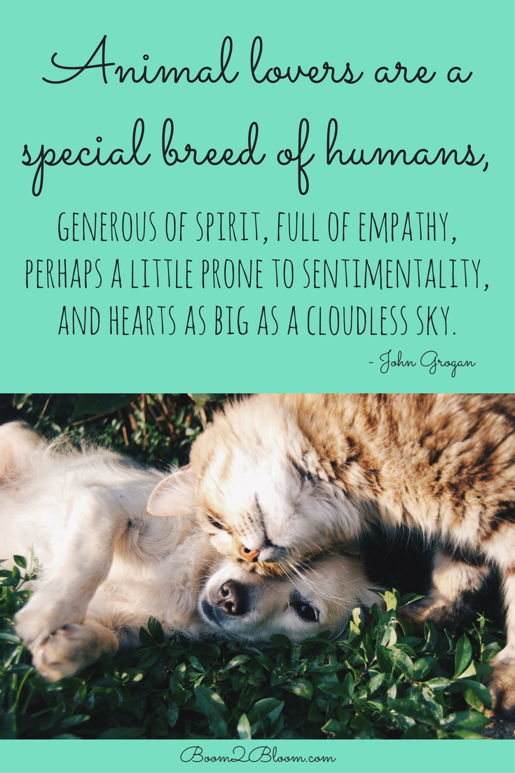 Animals Quotes Animal Quotes Heart & Soul Mates  Pet Quotes Dog Cat And Animal
